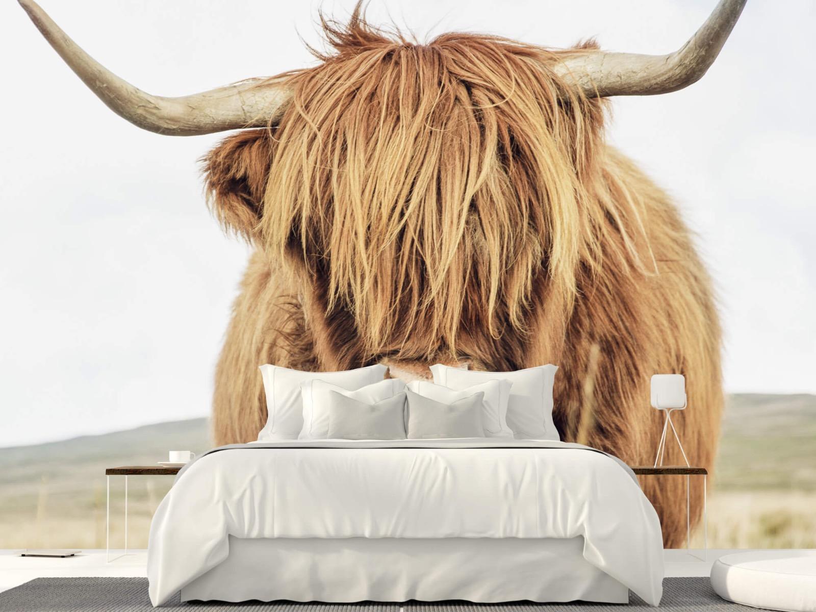 Hooglanders - Close-up van een Schotse hooglander - Keuken 23