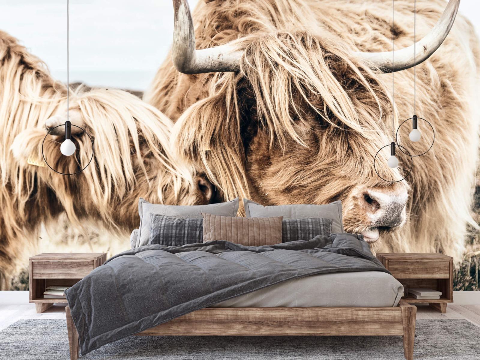 Hooglanders - Twee Schotse hooglanders - Slaapkamer 2