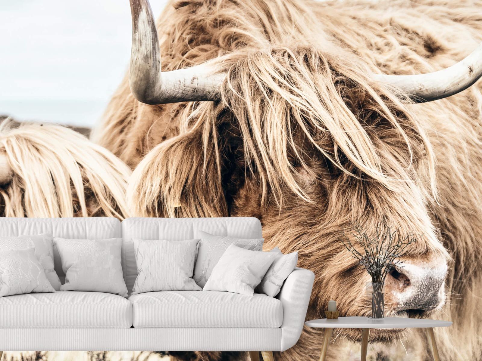 Hooglanders - Twee Schotse hooglanders - Slaapkamer 3