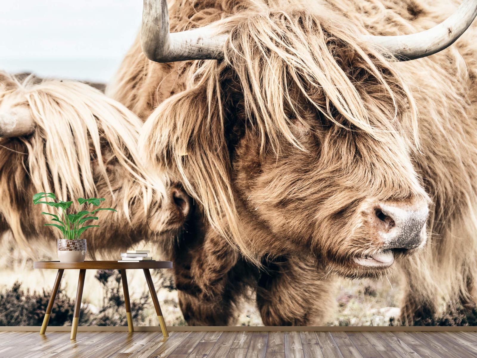 Hooglanders - Twee Schotse hooglanders - Slaapkamer 4