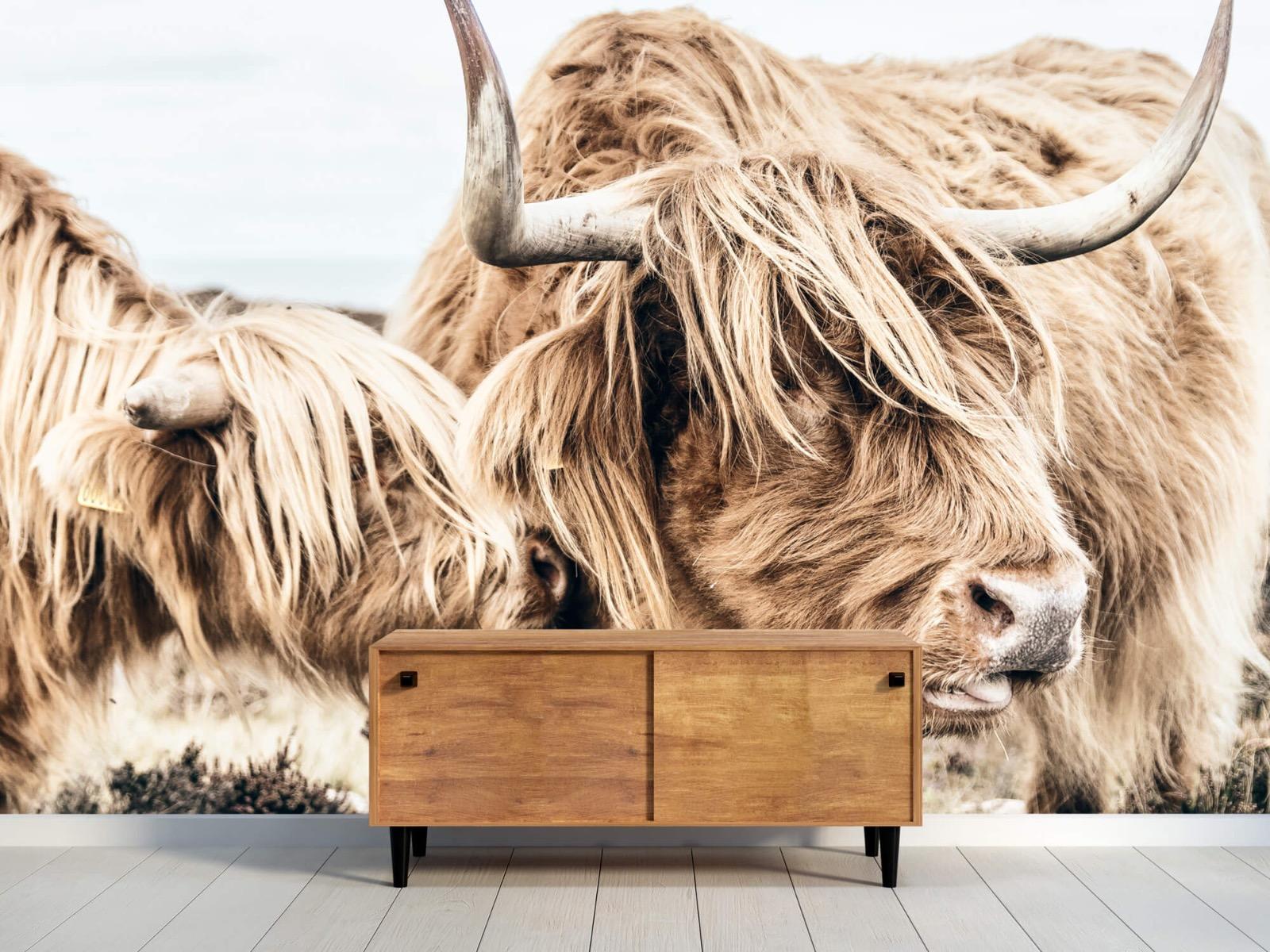 Hooglanders - Twee Schotse hooglanders - Slaapkamer 10