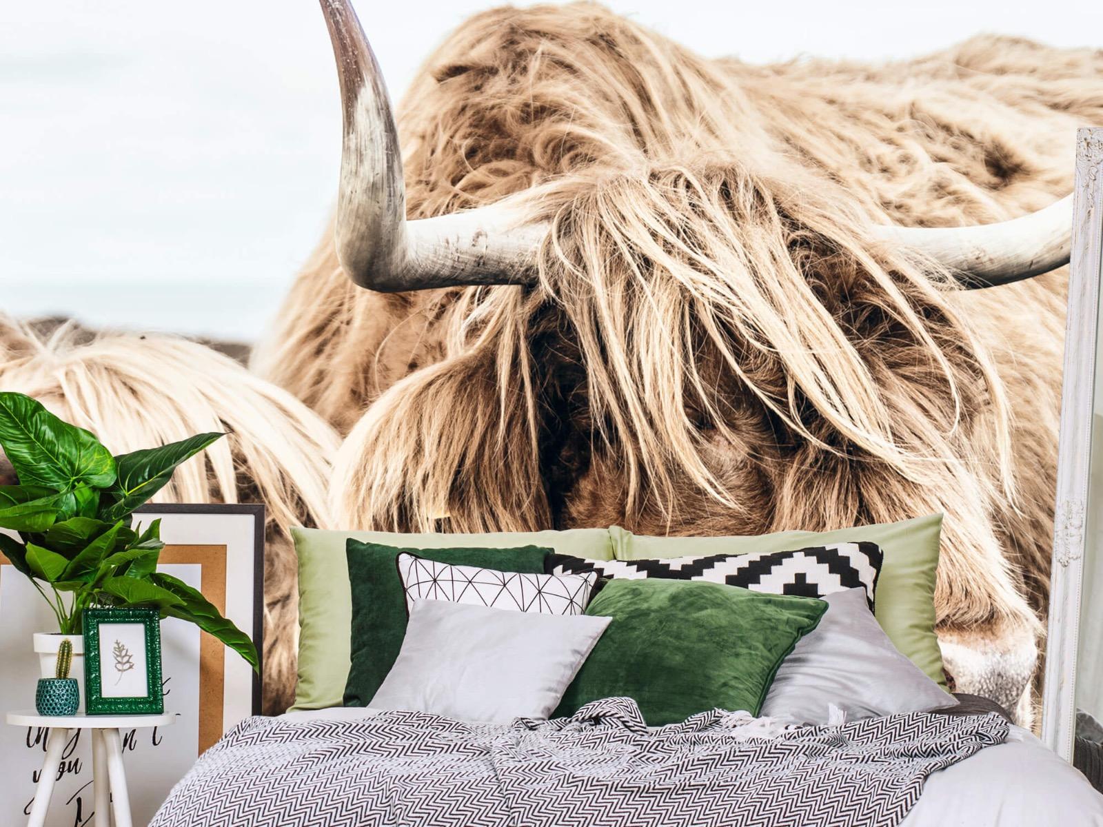 Hooglanders - Twee Schotse hooglanders - Slaapkamer 1