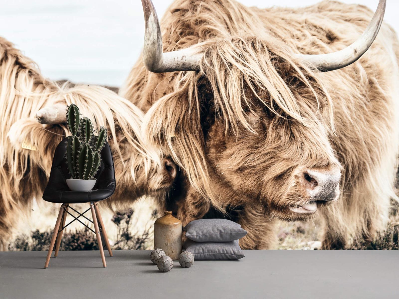 Hooglanders - Twee Schotse hooglanders - Slaapkamer 13