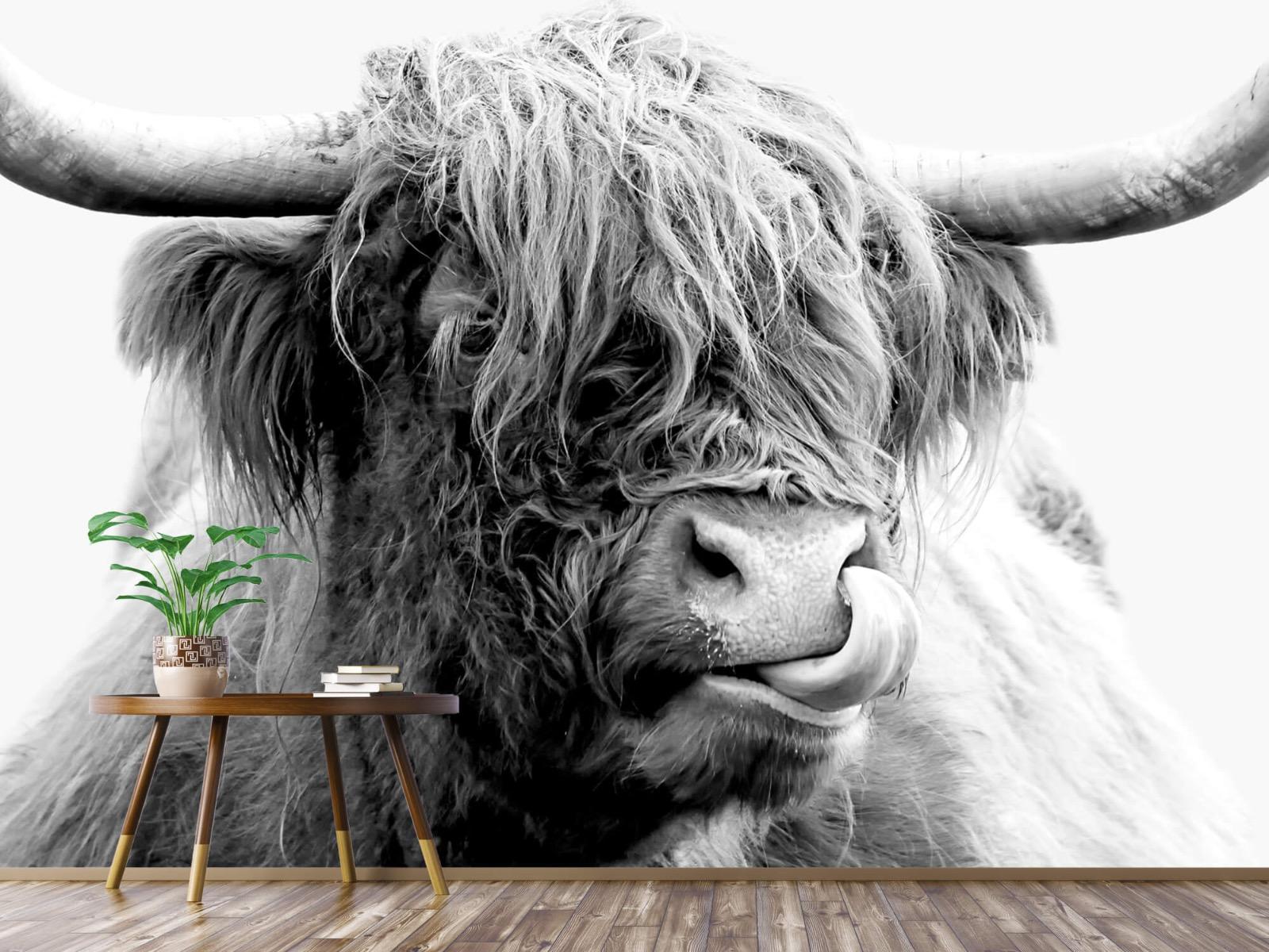 Hooglanders - Grappige Schotse hooglander - Woonkamer 4