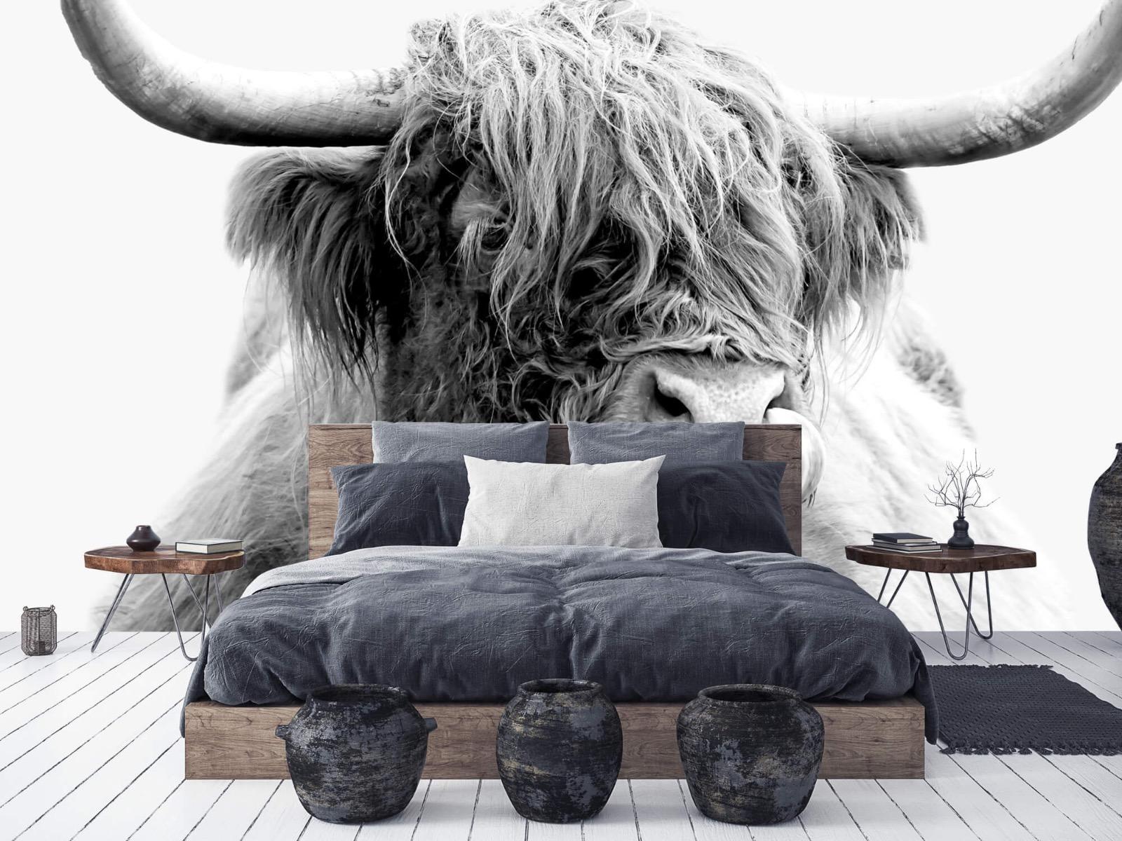 Hooglanders - Grappige Schotse hooglander - Woonkamer 6