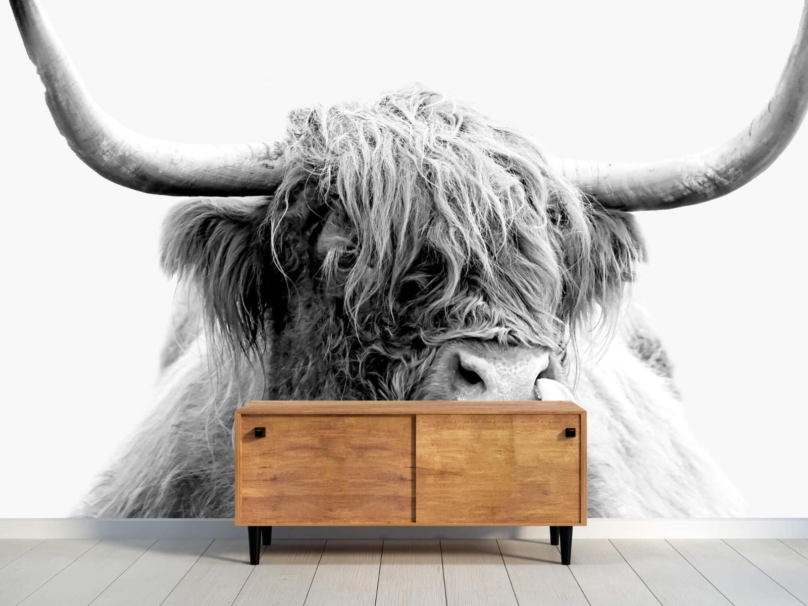 Hooglanders - Grappige Schotse hooglander - Woonkamer 10
