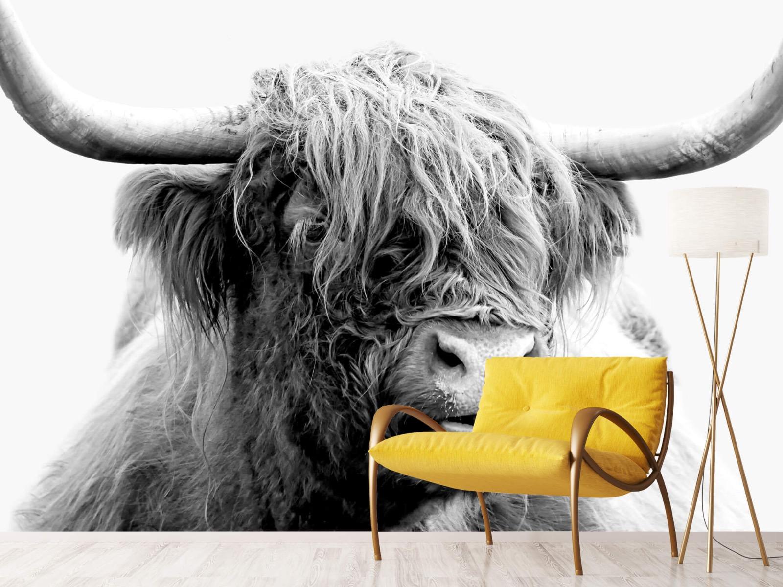 Hooglanders - Grappige Schotse hooglander - Woonkamer 11