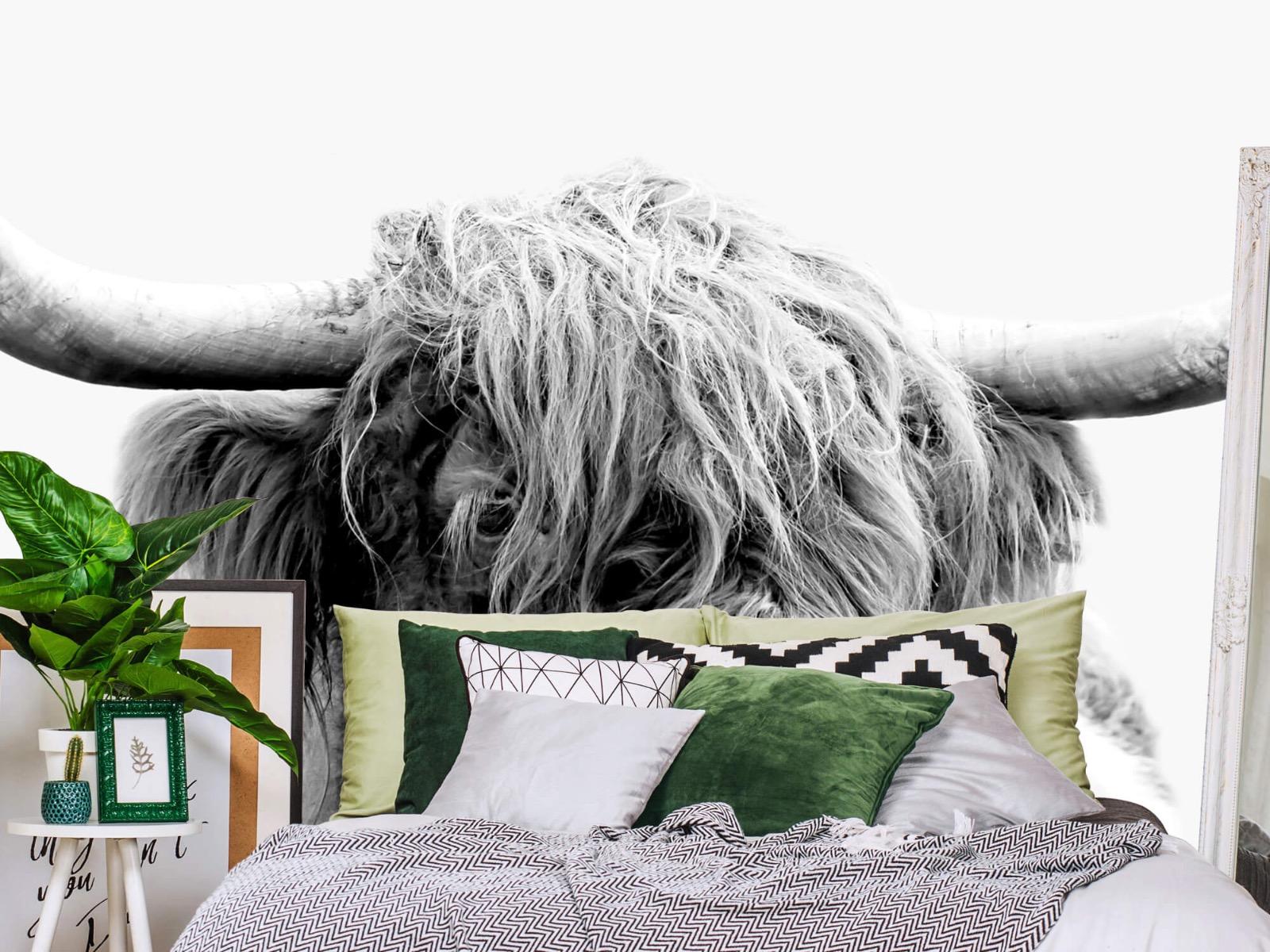 Hooglanders - Grappige Schotse hooglander - Woonkamer 13