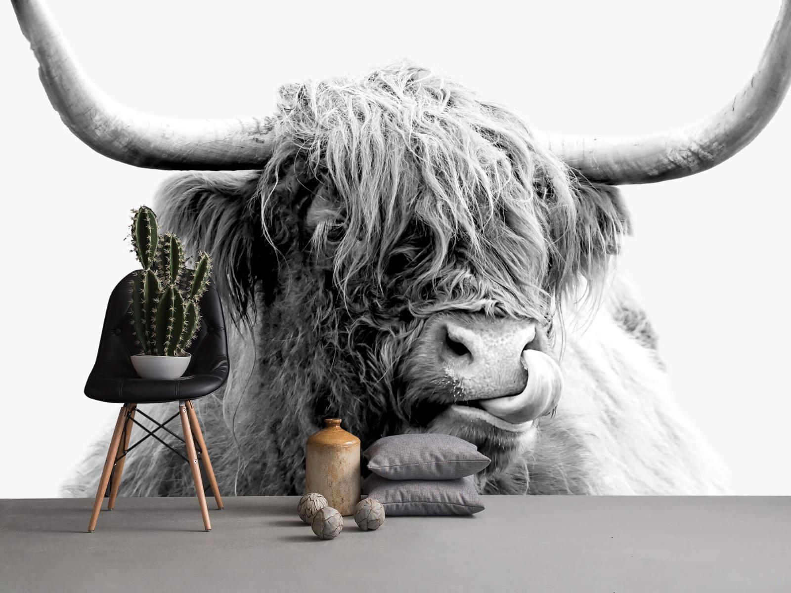 Hooglanders - Grappige Schotse hooglander - Woonkamer 14