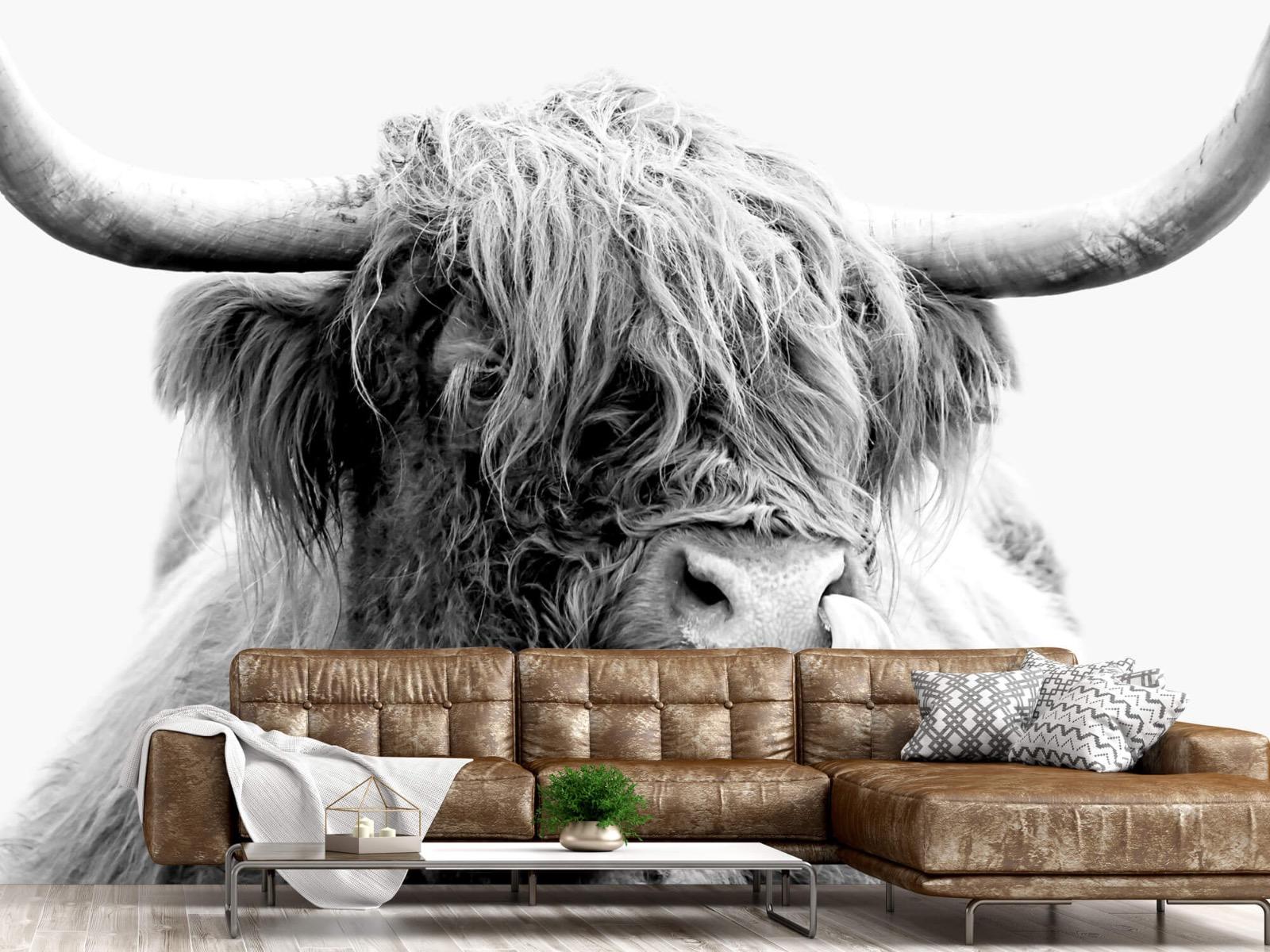 Hooglanders - Grappige Schotse hooglander - Woonkamer 15