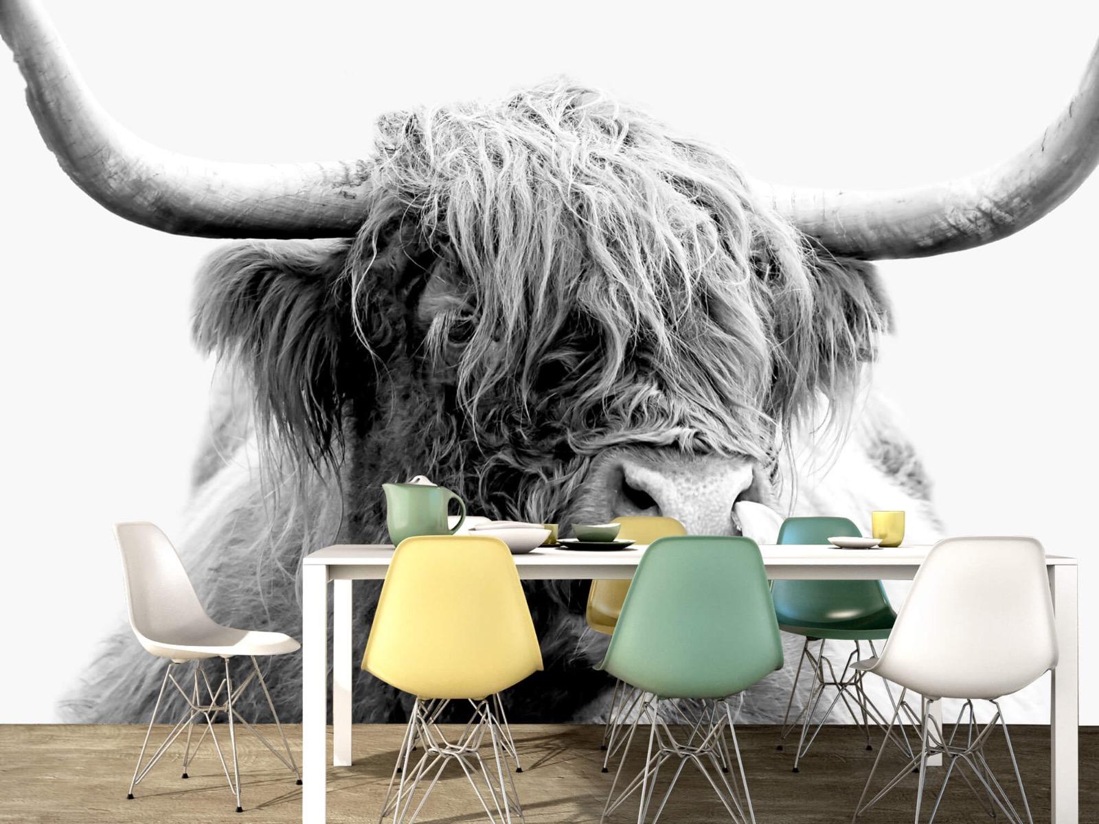Hooglanders - Grappige Schotse hooglander - Woonkamer 16