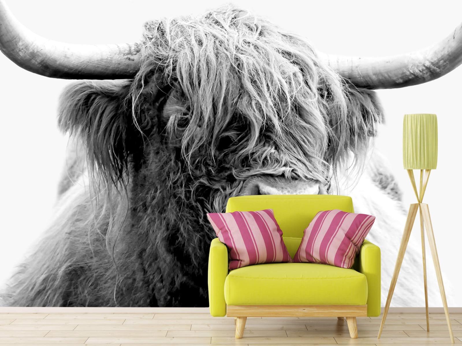Hooglanders - Grappige Schotse hooglander - Woonkamer 18