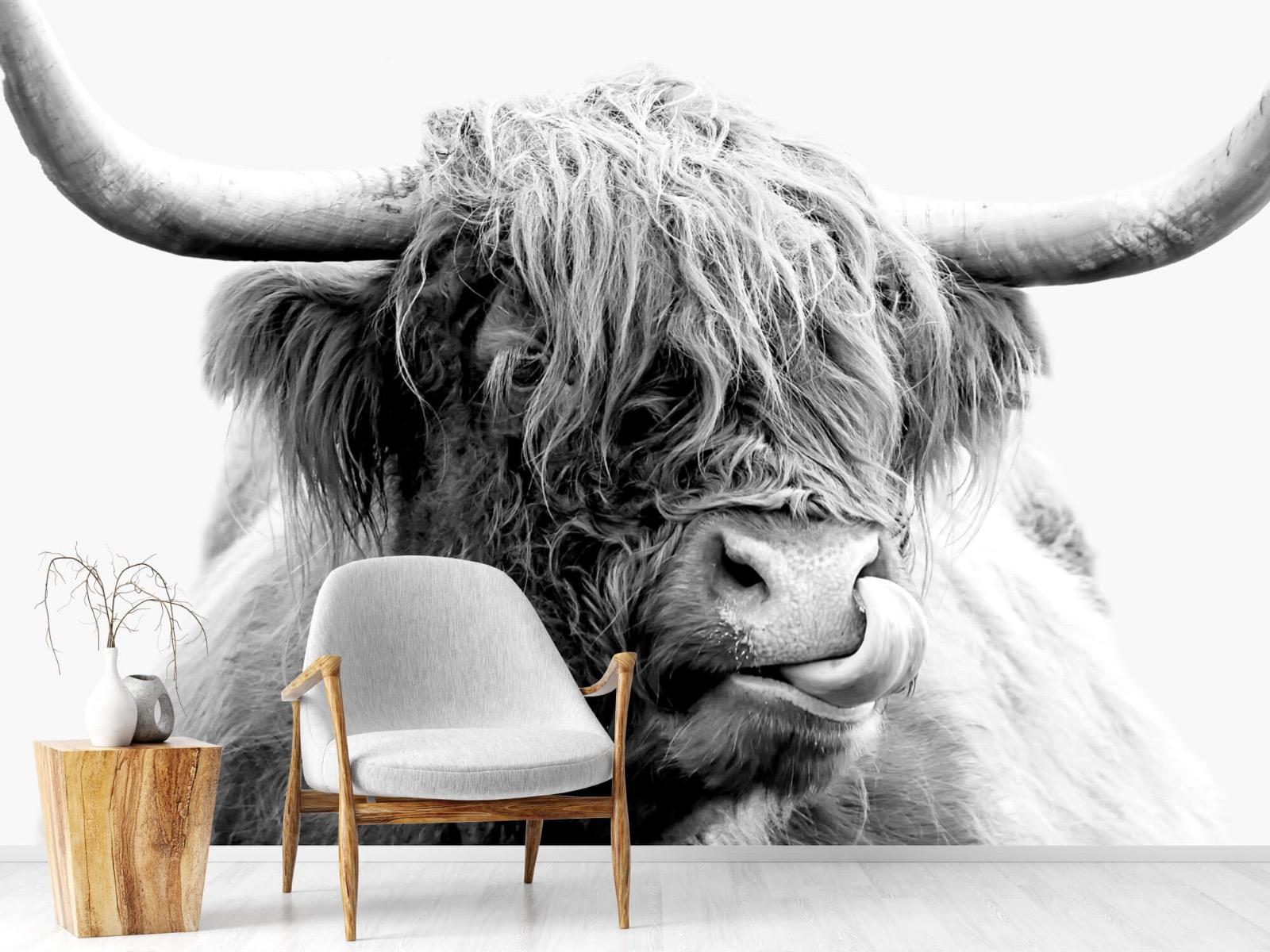 Hooglanders - Grappige Schotse hooglander - Woonkamer 1