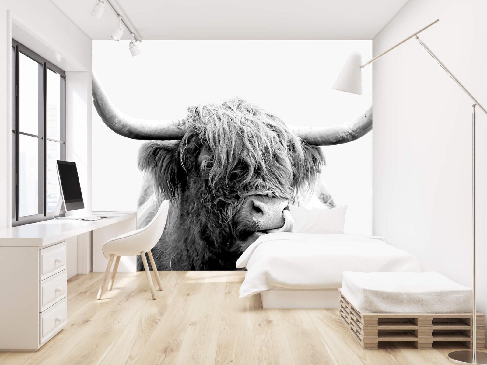 Hooglanders - Grappige Schotse hooglander - Woonkamer 22