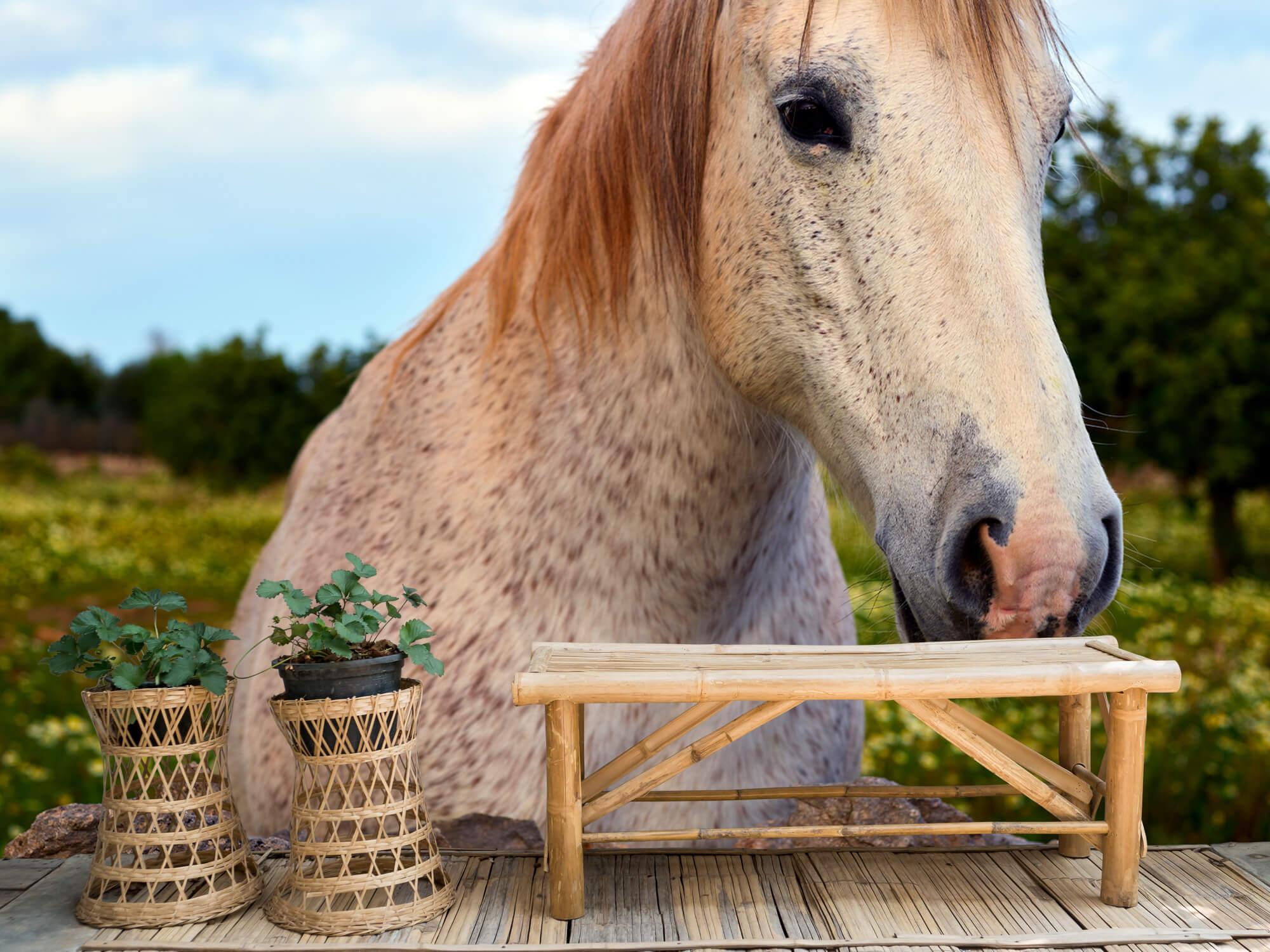 Paarden - Paard in bloemenweide - Kinderkamer 2