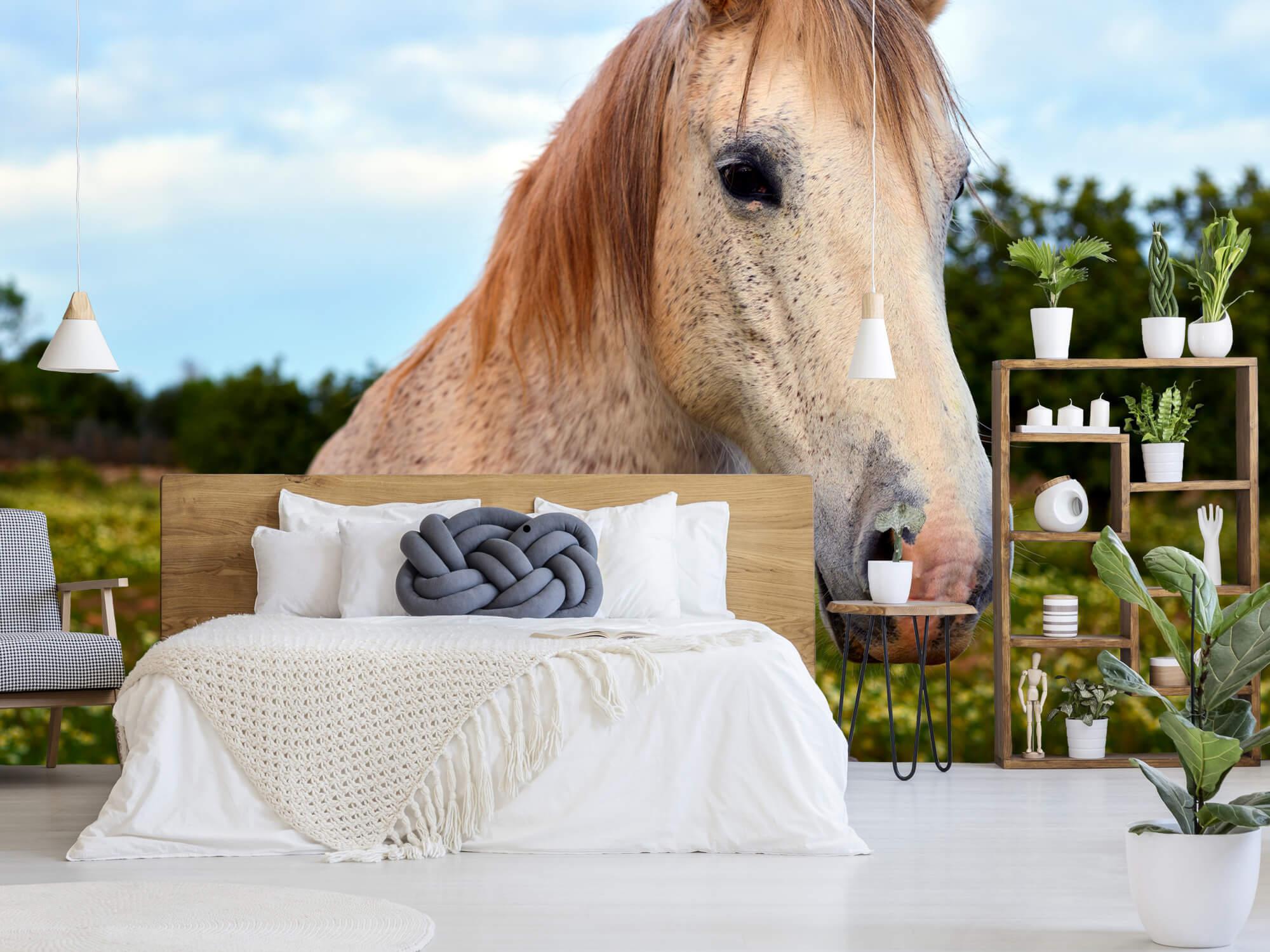 Paarden - Paard in bloemenweide - Kinderkamer 3