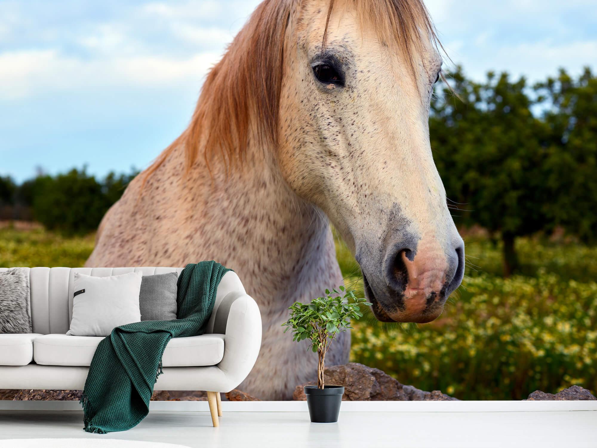 Paarden - Paard in bloemenweide - Kinderkamer 8