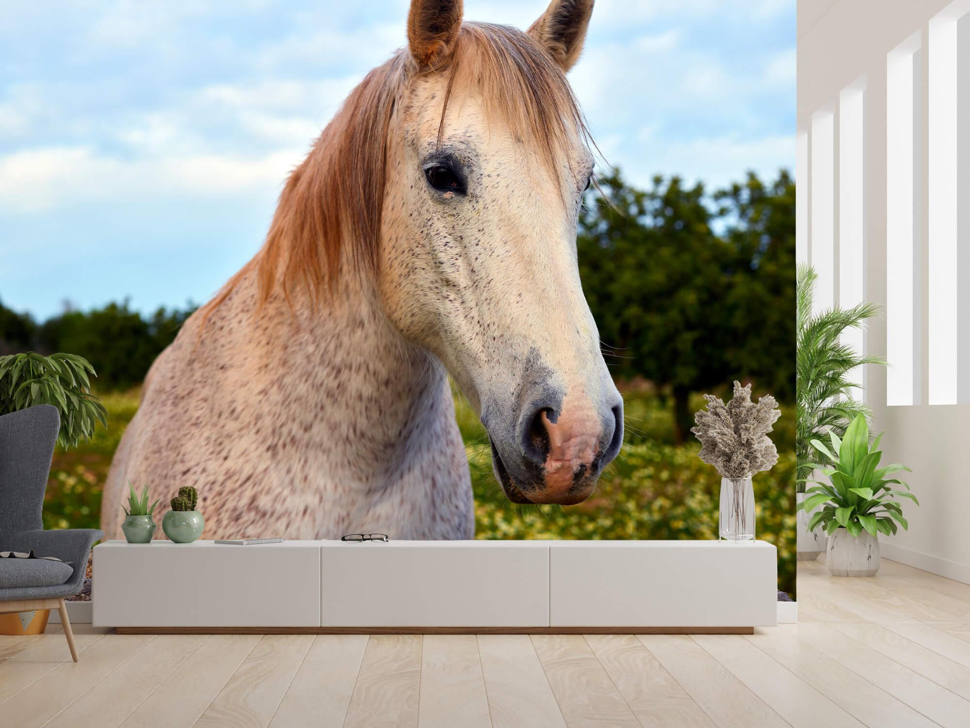 Paarden - Paard in bloemenweide - Kinderkamer 10