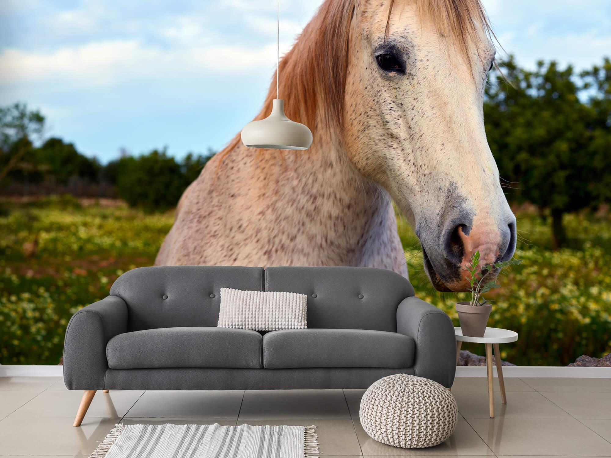 Paarden - Paard in bloemenweide - Kinderkamer 11