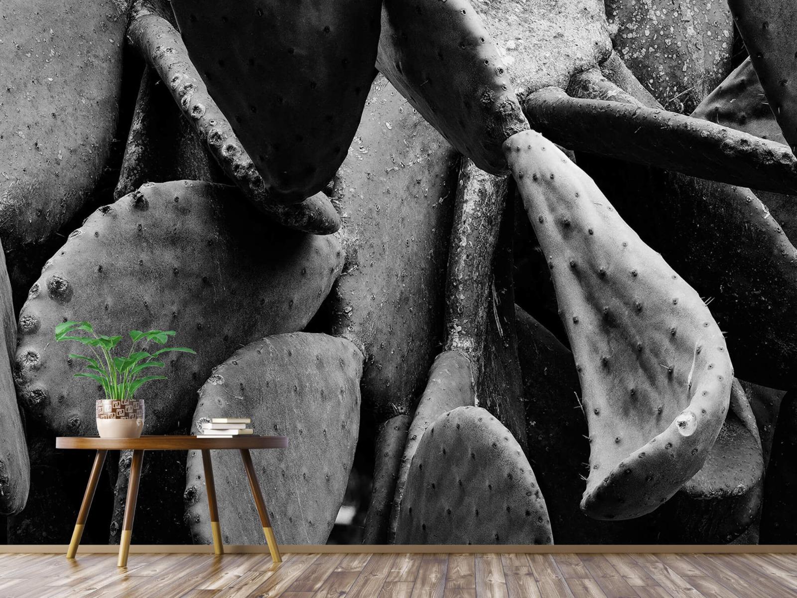 Zwart Wit behang - Cactus, zwart-wit - Slaapkamer 4