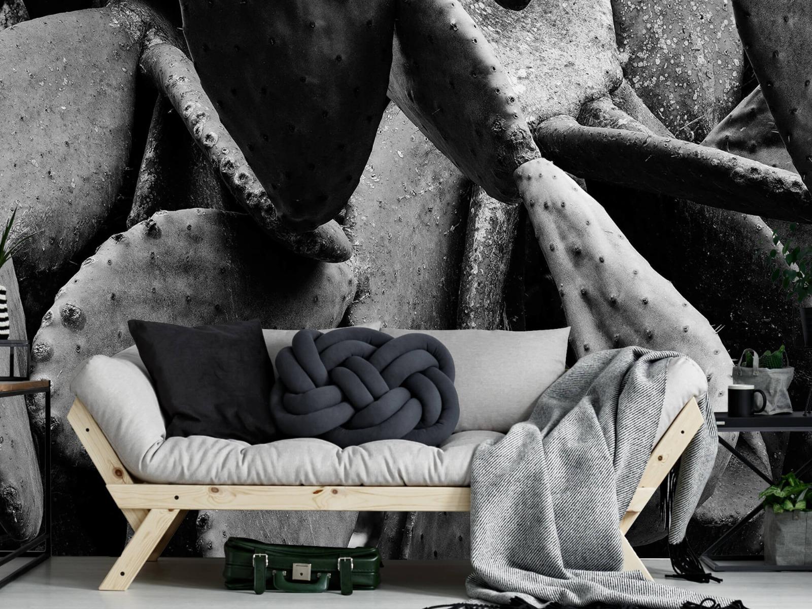 Zwart Wit behang - Cactus, zwart-wit - Slaapkamer 1