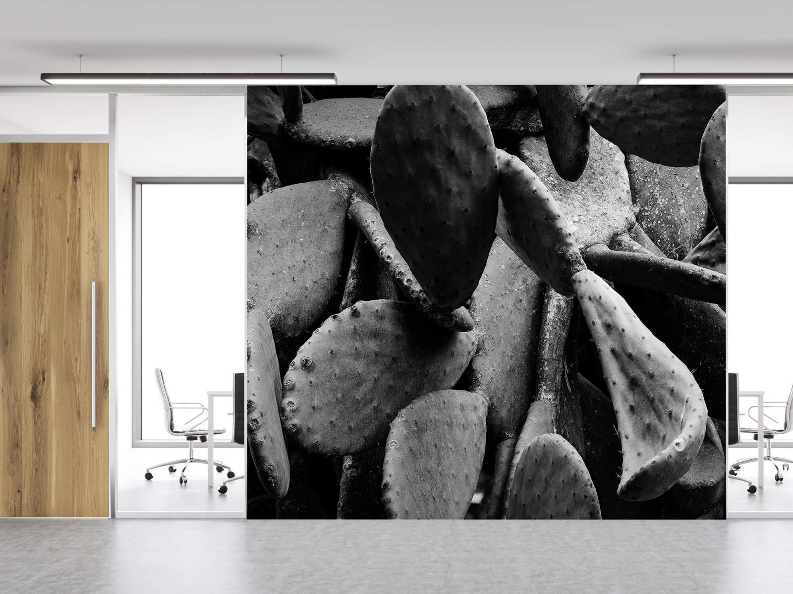Zwart Wit behang - Cactus, zwart-wit - Slaapkamer 11