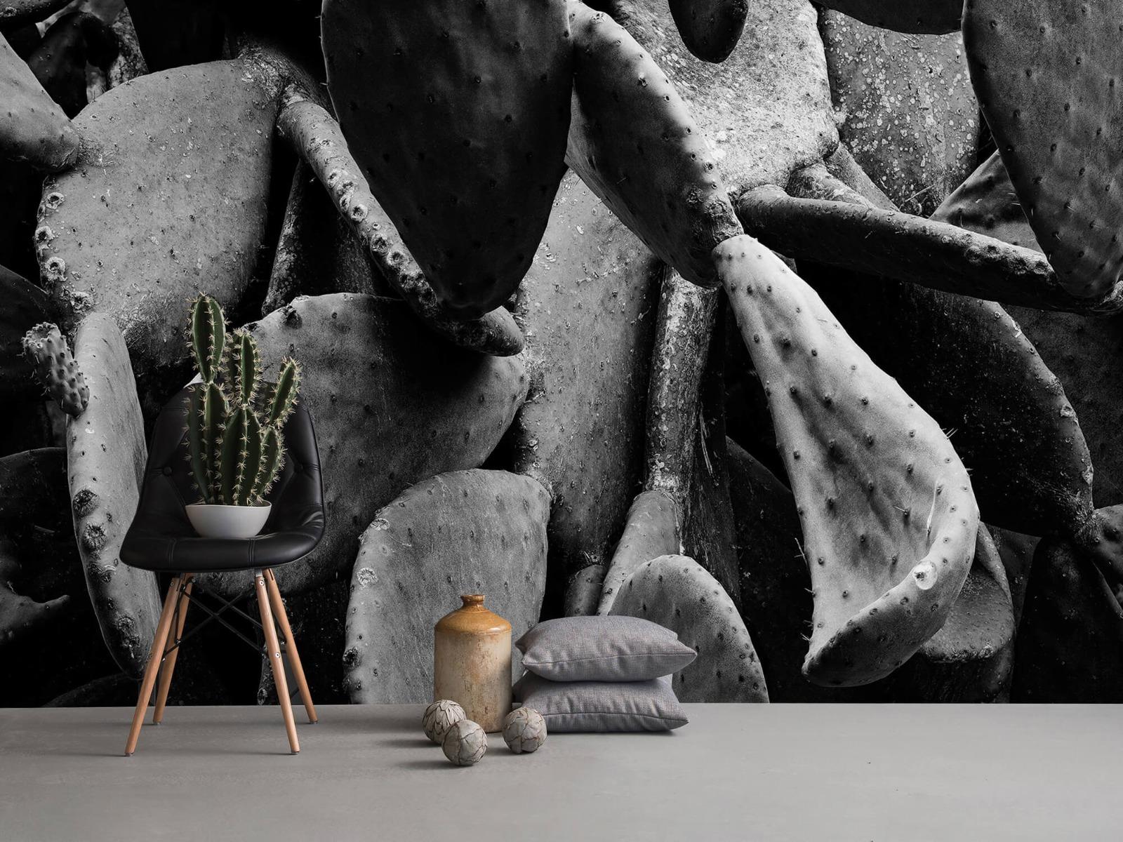 Zwart Wit behang - Cactus, zwart-wit - Slaapkamer 13