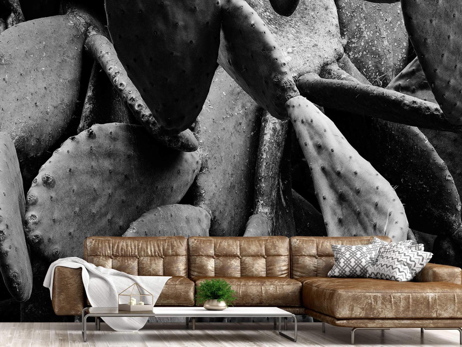 Zwart Wit behang - Cactus, zwart-wit - Slaapkamer 14