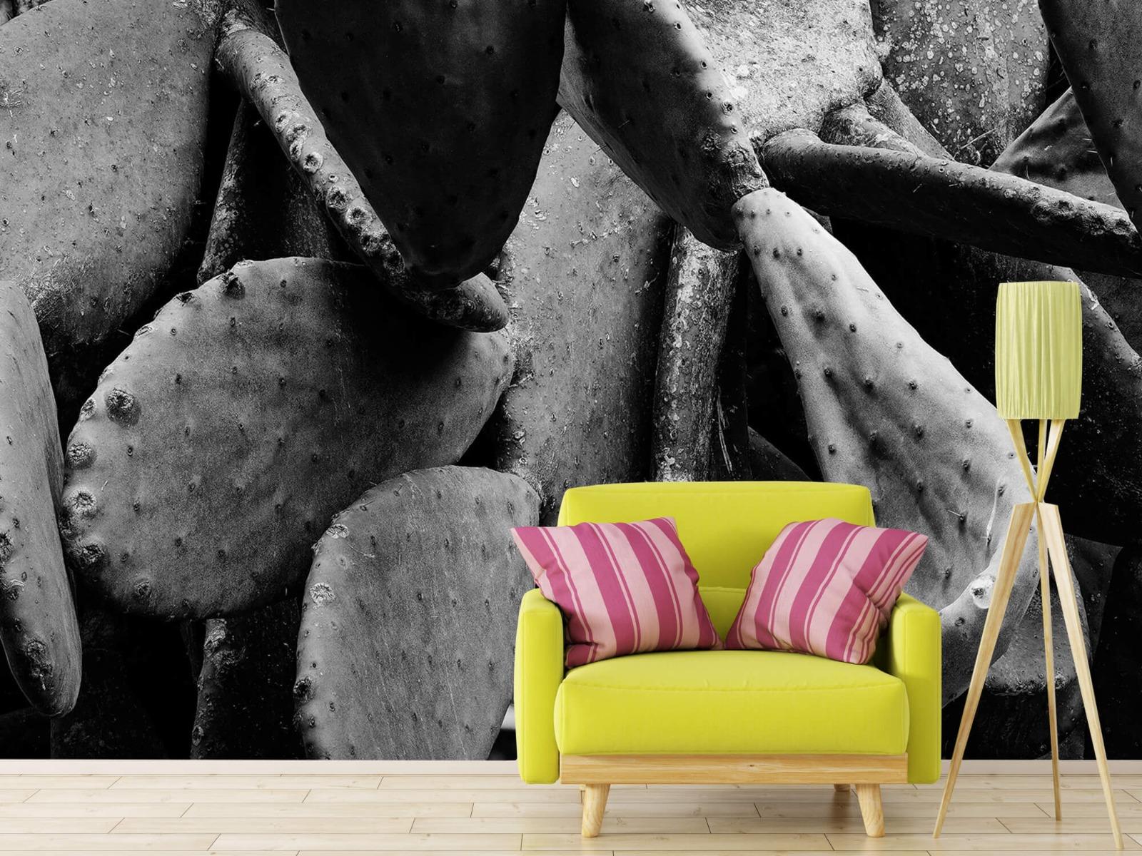 Zwart Wit behang - Cactus, zwart-wit - Slaapkamer 17