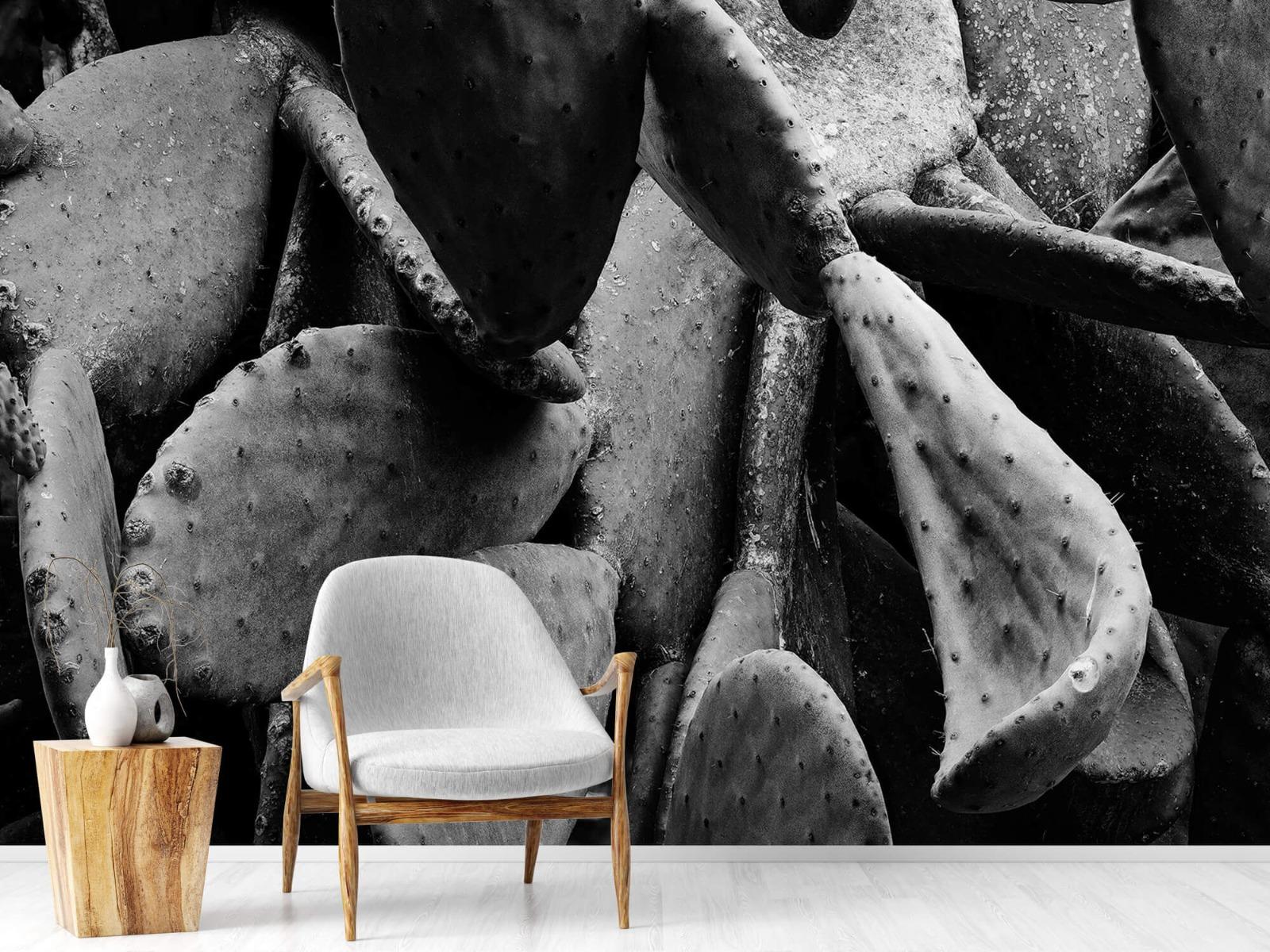 Zwart Wit behang - Cactus, zwart-wit - Slaapkamer 18