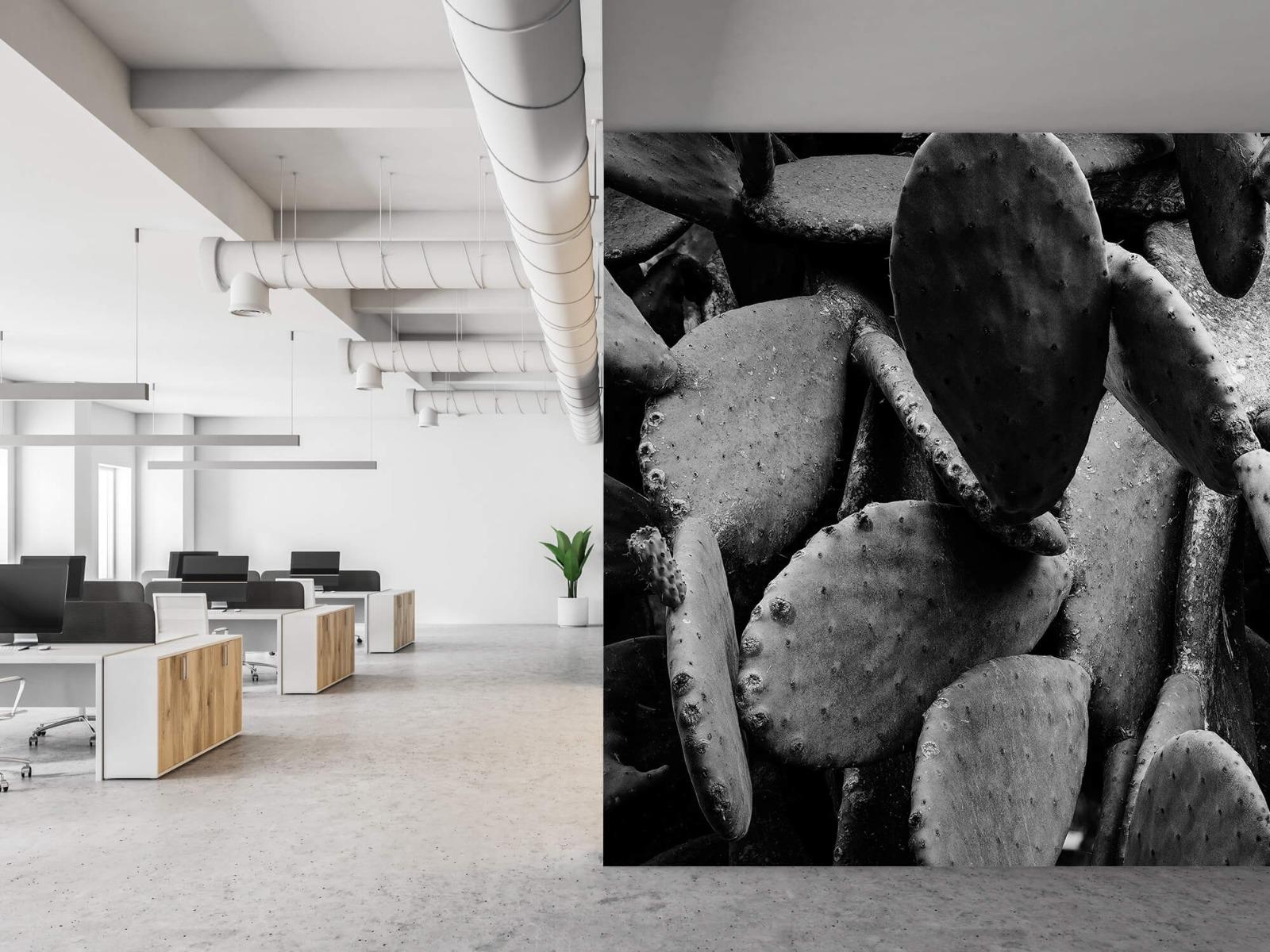 Zwart Wit behang - Cactus, zwart-wit - Slaapkamer 21