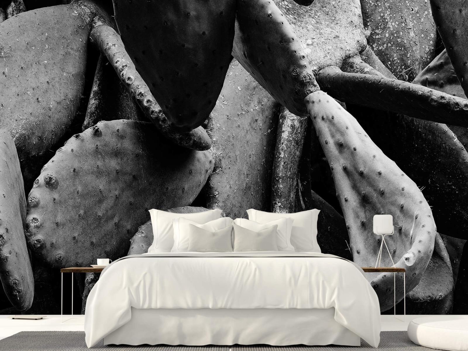 Zwart Wit behang - Cactus, zwart-wit - Slaapkamer 23