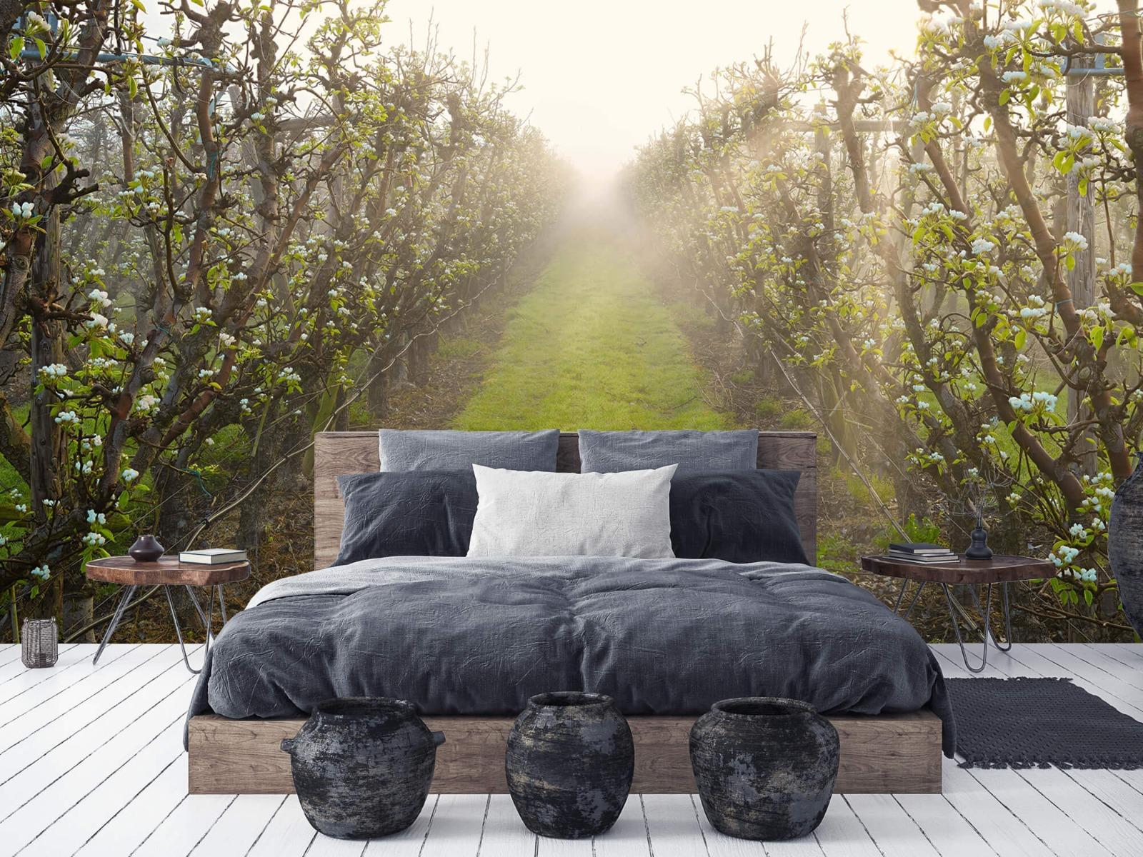 Bomen - Perenbloesem in mist - Slaapkamer 6