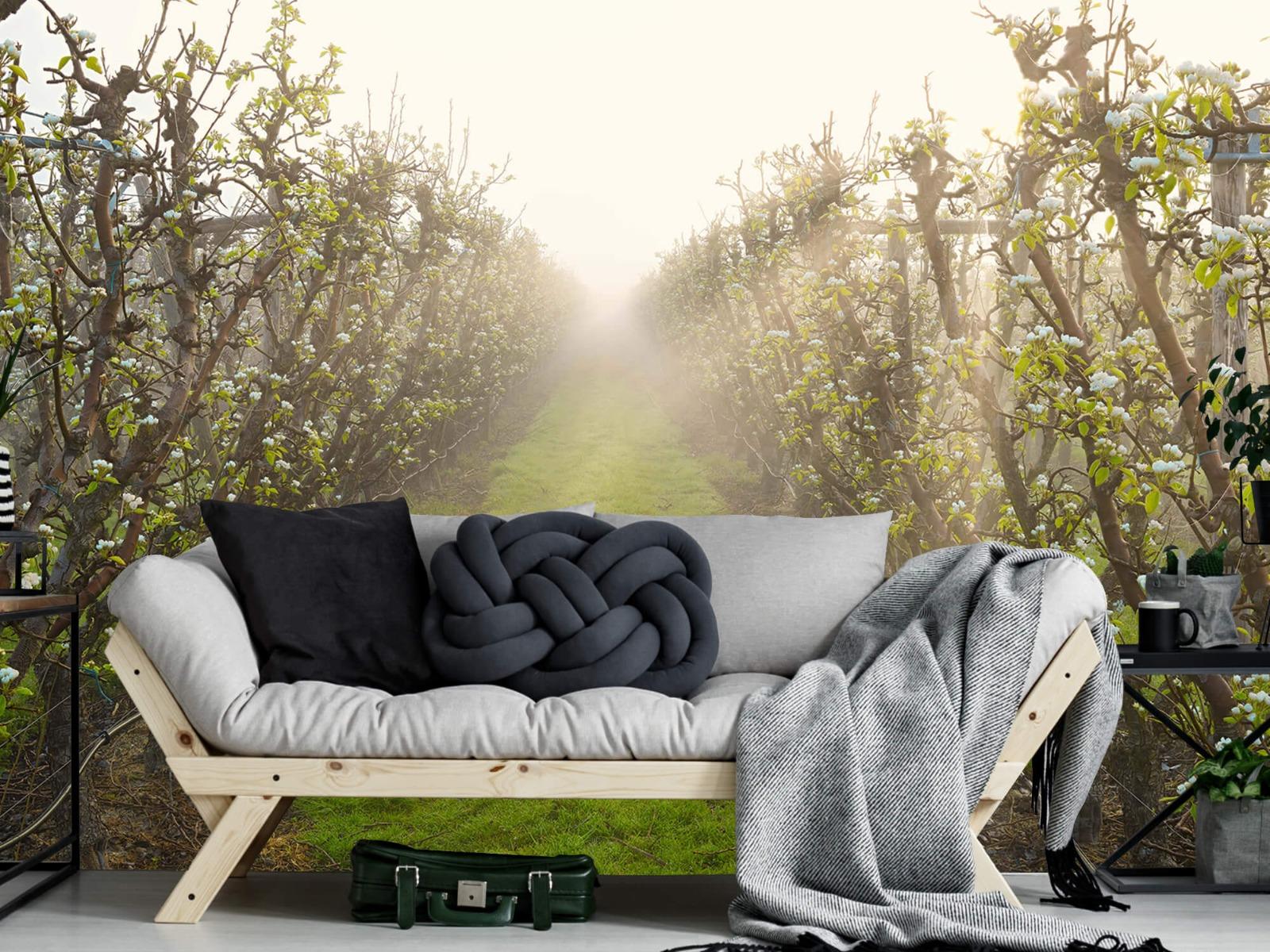 Bomen - Perenbloesem in mist - Slaapkamer 7