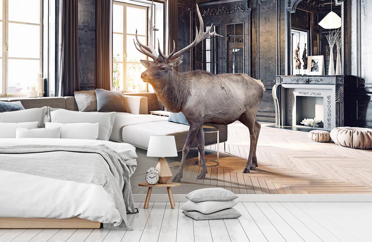 3D Eland in een huis 2