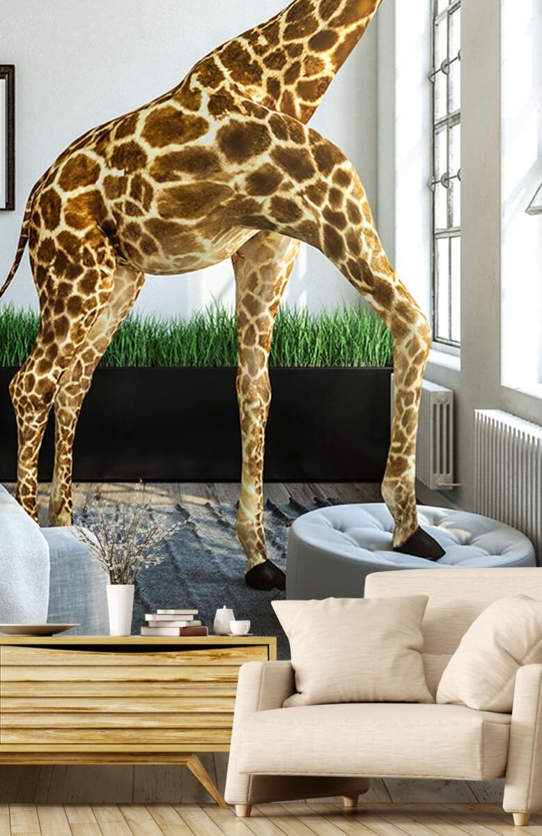 Dieren - Glurende giraffe - Kantoor 15