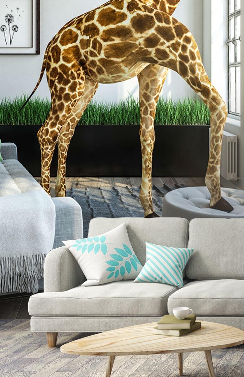 Dieren - Glurende giraffe - Kantoor 2