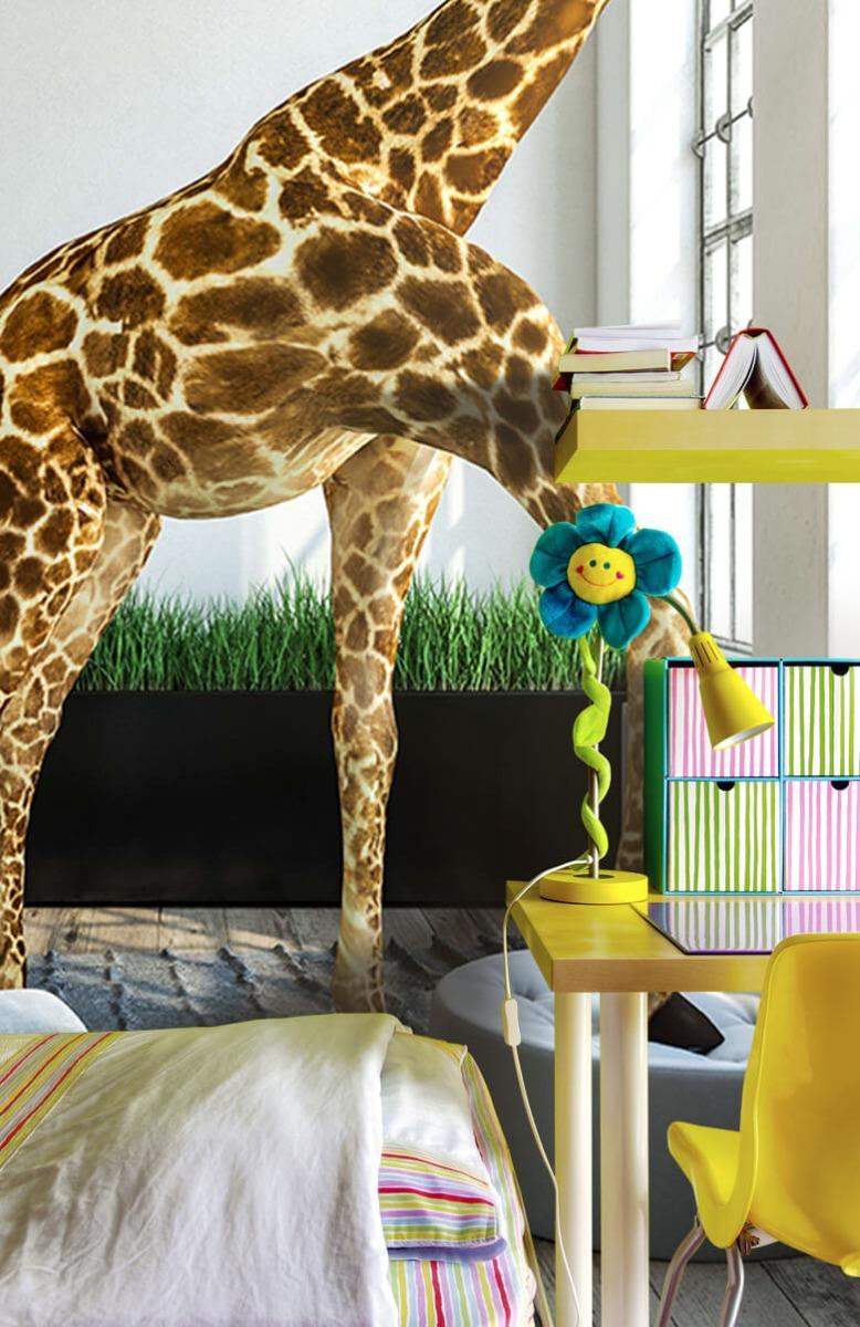 Dieren - Glurende giraffe - Kantoor 5