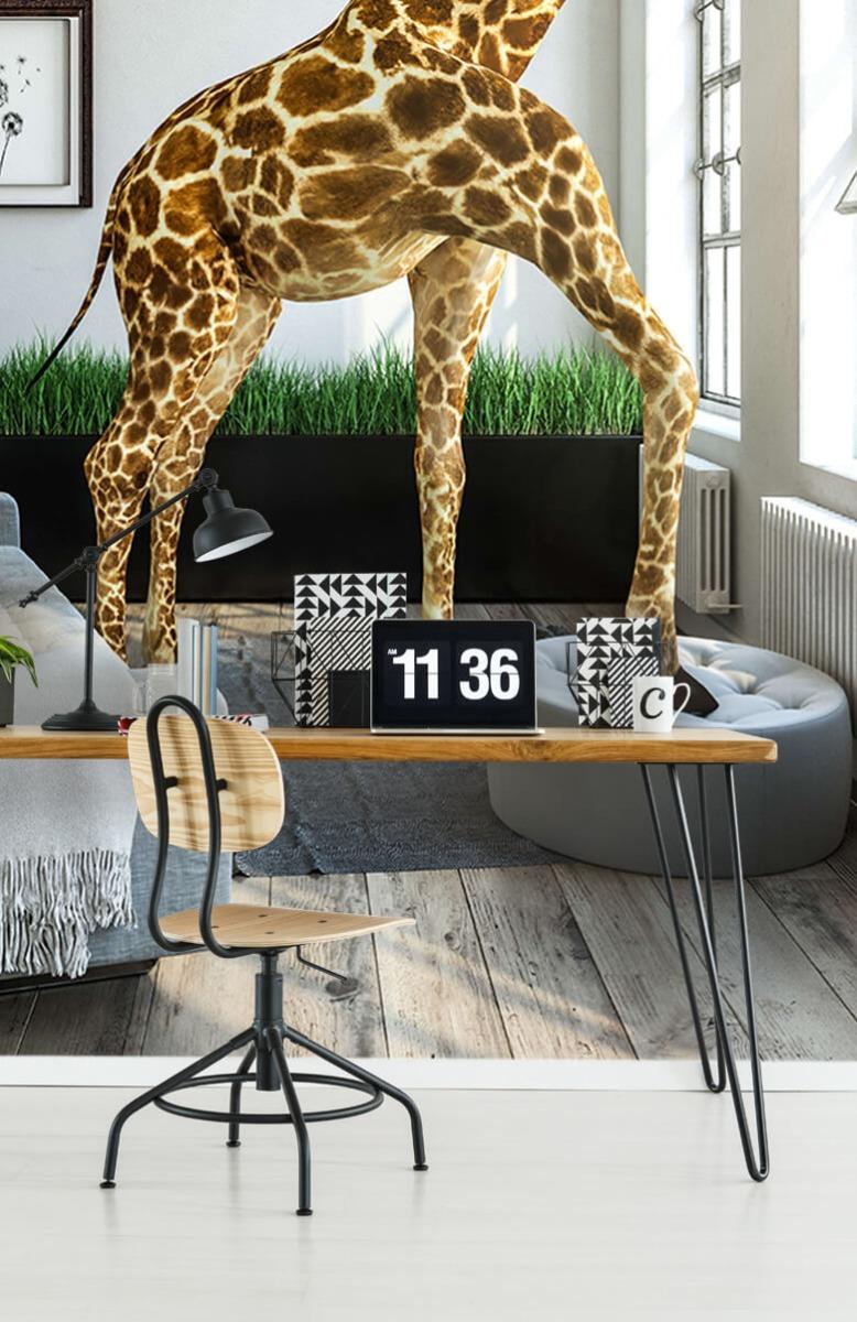 Dieren - Glurende giraffe - Kantoor 10