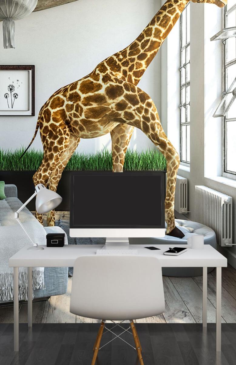 Dieren - Glurende giraffe - Kantoor 11