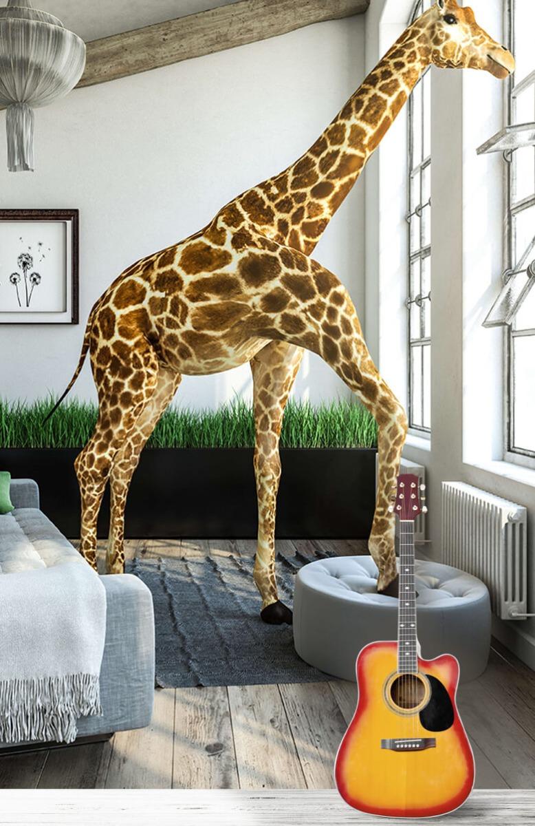 Dieren - Glurende giraffe - Kantoor 3