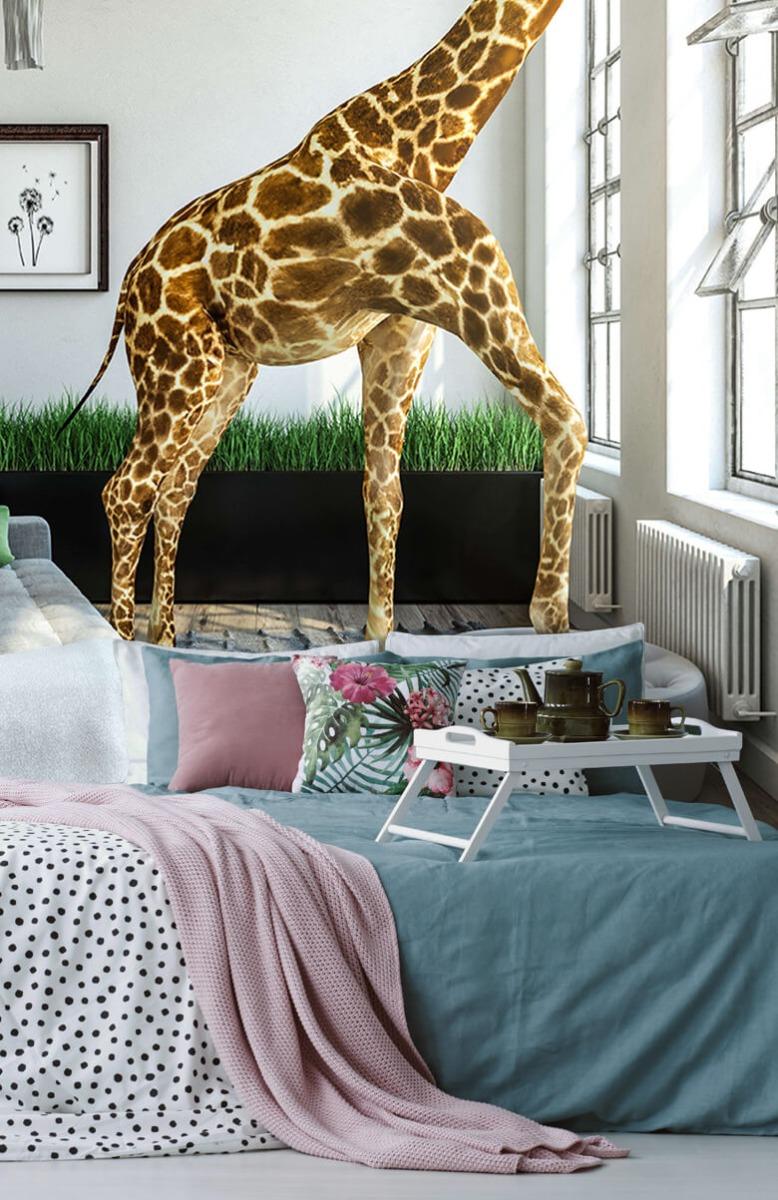 Dieren - Glurende giraffe - Kantoor 12