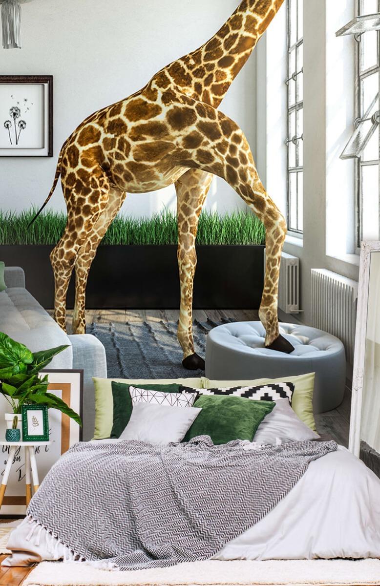 Dieren - Glurende giraffe - Kantoor 13
