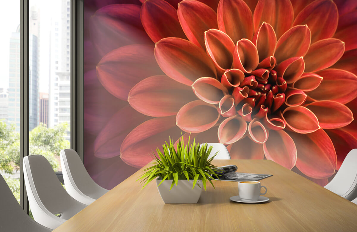 Bloemen, planten en bomen Gekleurde dahlia 3