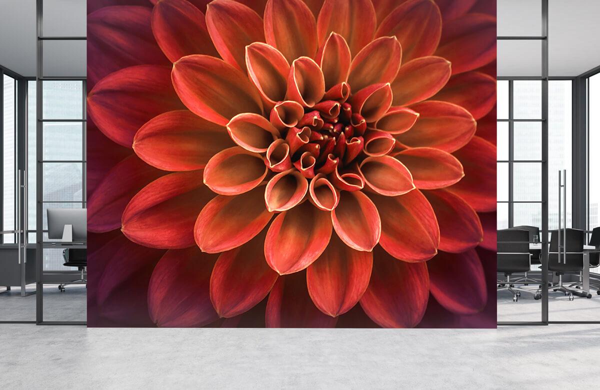 Bloemen, planten en bomen Gekleurde dahlia 4