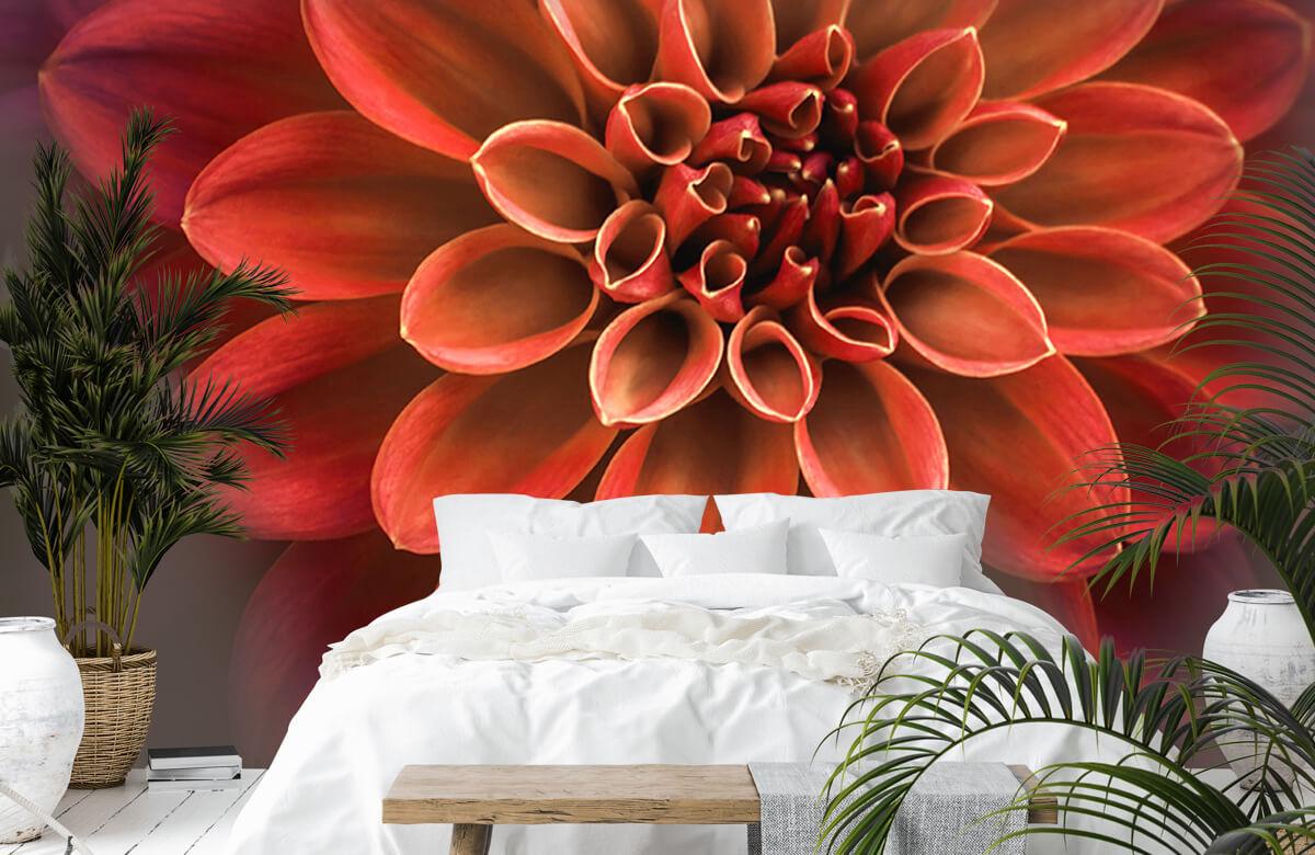 Bloemen, planten en bomen Gekleurde dahlia 6