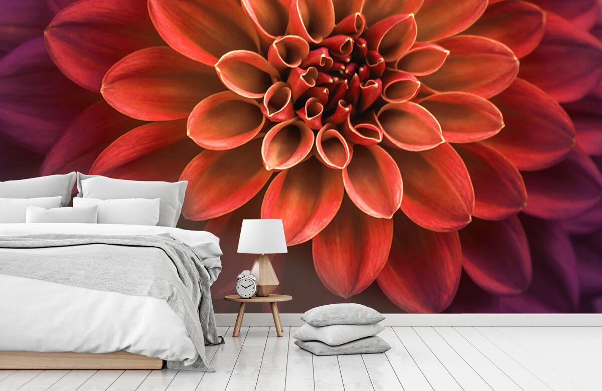 Bloemen, planten en bomen Gekleurde dahlia 7