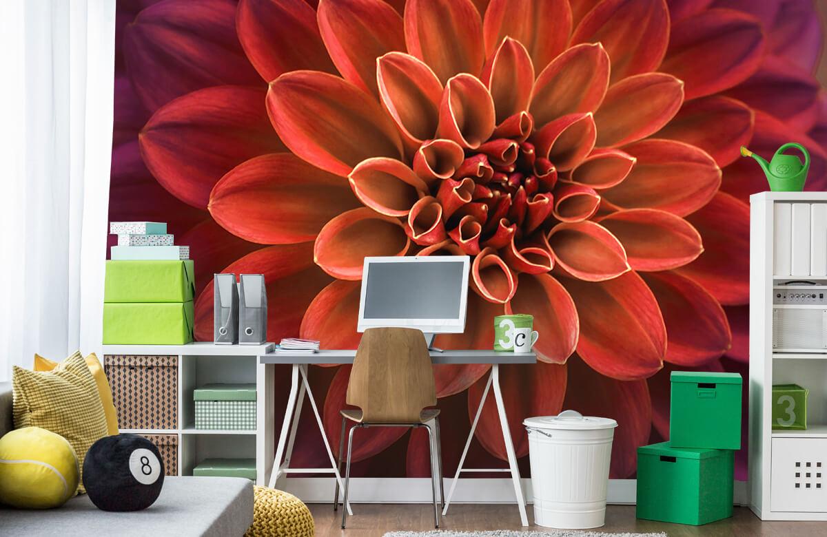 Bloemen, planten en bomen Gekleurde dahlia 9