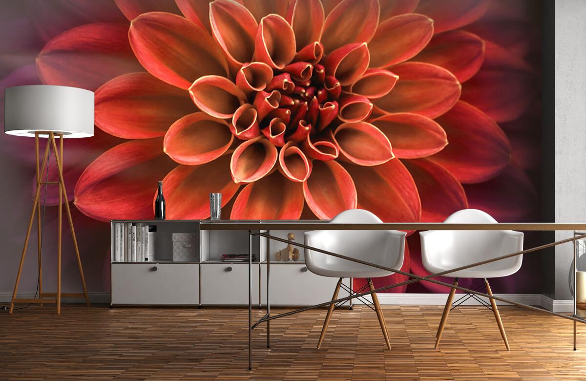 Bloemen, planten en bomen Gekleurde dahlia 11