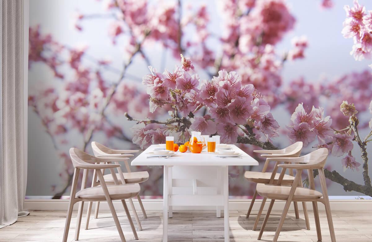 Bloemen, planten en bomen Close-up roze bloesem 2